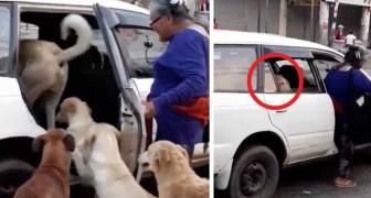 Ein Taxifahrer lässt 8 streunende Hunde in sein Auto, die eine alte Dame beschlossen hat, mit nach Hause zu nehmen