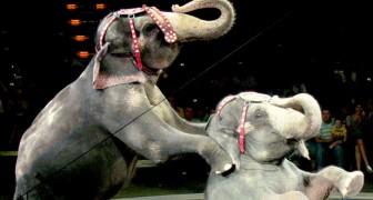 Circo senza animali: la regione Campania proibirà lo sfruttamento entro il 2021