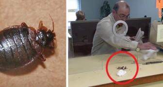 Het stadskantoor weigert hem te helpen met de ongediertebestrijding: hij neemt wraak door de insecten op de balie te deponeren