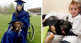 18 dappere honden wier heroïsche daden de levens van hun baasjes hebben gered