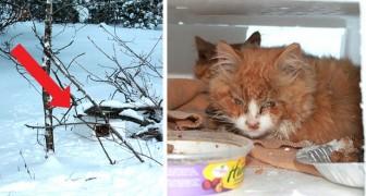 Een man ziet een doos in de sneeuw en vindt twee in de steek gelaten kittens die bijna bevroren zijn