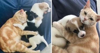 La storia di Kathryn, la gattina che ha deciso di adottare dei cuccioli di cane come fossero suoi figli
