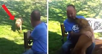 Der Besitzer verliert nach einem Krankenhausaufenthalt 22 kg: Der Hund überwindet das anfängliche Misstrauen und läuft dann zu ihm