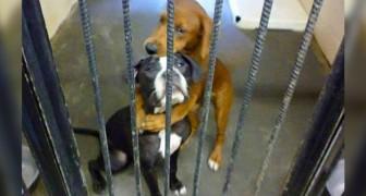 Deze twee kleine honden omhelzen elkaar wanhopig net voordat ze worden afgemaakt: de foto ontroert een man die ze adopteert
