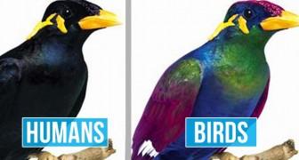Queste immagini mostrano la differenza fra come vediamo il mondo noi umani e come lo vedono gli uccelli
