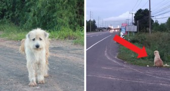 This dog waited for its owners for 4 years in the same place