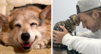 These cute pets will lift your spirit with their beautiful smiles and loving mood