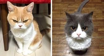 13 gatos muito engraçados com suas carinhas enfurecidas