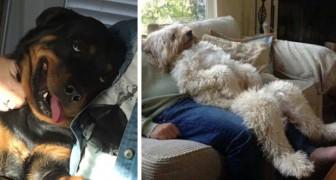 Deze 17 foto's laten zien hoe onze honden ons altijd weten op te vrolijken