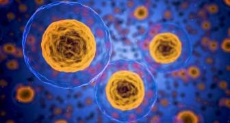 In casi di stress, le cellule maschili tendono a suicidarsi, quelle femminili sopravvivono: lo conferma uno studio