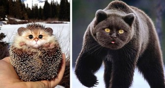 Visage de chat et corps d'autres animaux : 20 images troublantes et drôles à la fois