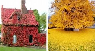 Une palette de couleurs est au centre de cette galerie de photos qui célèbre la magie de l'automne