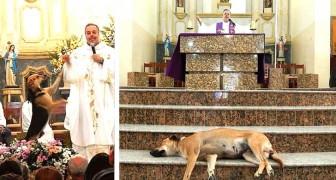 À la messe avec les chiens : ce prêtre emmène ses amis errants avec lui pour les aider à trouver un foyer