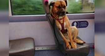 Esta perra ha subido sola al autobús y ha esperado al patrón que la ha abandonado