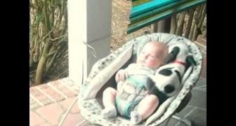 O filhote de pitbull e um recém-nascido dividem a cadeirinha