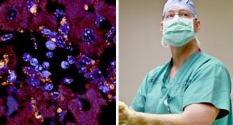 Ein Team von Wissenschaftlern hat in einem Darmbakterium den Ausbruch von Autoimmunerkrankungen identifiziert