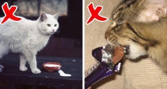 10 cibi che potrebbero danneggiare la salute del tuo gatto e che faresti meglio ad evitare