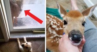 A woman forgets to close her porch door during a heavy storm and finds herself with 3 fawns in her living room