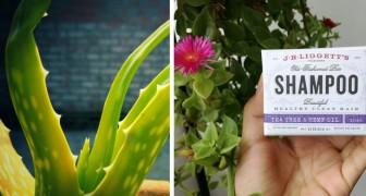 Come preparare lo shampoo solido all'aloe vera, un'alternativa economica ed ecologica ai prodotti classici