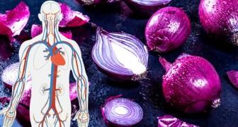 Les bienfaits de l'oignon rouge : un aliment savoureux et un allié de notre santé