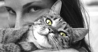 Le vibrazioni prodotte dalle fusa dei gatti hanno effetti terapeutici: un'analisi ne spiega i benefici