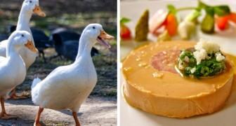 Trop de souffrance pour les canards et les oies : New York interdit le foie gras