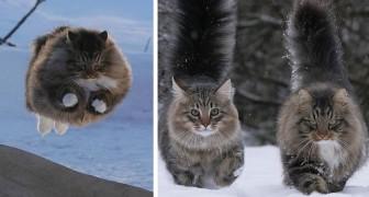20 foto's van katten die geen moeite hebben om in de sneeuw te overleven