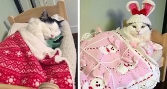 O seu ex dono a maltratava: hoje esta gatinha dorme feliz na sua caminha e tem até os seus próprios ursinhos de pelúcia