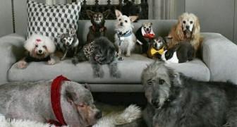 Een man besloot om alle oude honden van de opvanghuizen te adopteren die geen thuis konden vinden