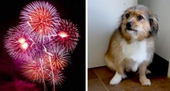 Fyrverkerierna var för starka och en 18-månader gammal hund dör i hjärtinfarkt av rädsla