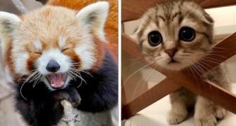 16 foto's van huisdieren vol sympathie en tederheid