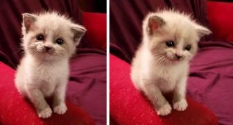 Den här adopterade kattungen bjuder sin nya matte på ett gulligt leende varje gång hon tar ett foto