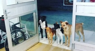 A homeless man is hospitalized and his 4 little dogs wait patiently for him at the hospital entrance door