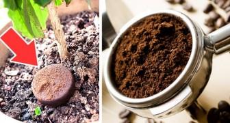 I fondi del caffè possono tornare utili in casa e per la cura del corpo: 12 modi in cui puoi riutilizzarli