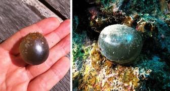 Dieses kugelförmige Wesen ist einer der größten einzelligen Organismen und lebt in den Tiefen der Ozeane