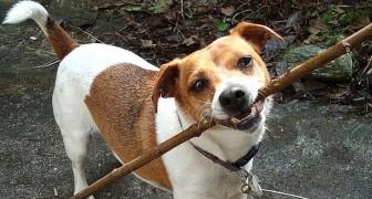 Geschenke, Gähnen und Spucke: 9 Arten, wie unsere Hunde versuchen, uns etwas zu sagen