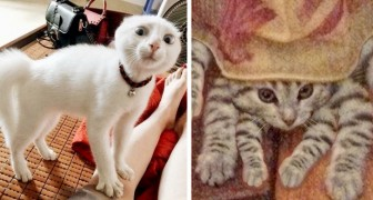 Queste 18 foto dimostrano che i gatti sono una cura infallibile contro il malumore