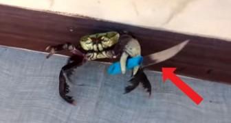 Een krab verdedigt zichzelf door met een mes te zwaaien om te voorkomen dat hij wordt gekookt door de chef van het restaurant