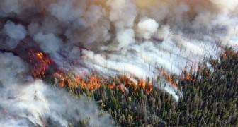 Rischiamo indicibili sofferenze: 11.000 scienziati firmano uno studio sui pericoli del climate change