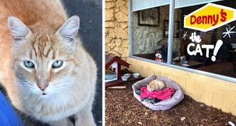 Na in de steek te zijn gelaten, werd dit kitten geadopteerd door een restaurant en zijn klanten