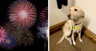 Omdat hij bang werd voor het vuurwerk, heeft een blindengeleidehond zijn blinde baasje verlaten