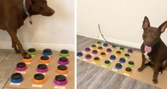Dank eines elektronischen Texters hat dieser Hund gelernt, mit seiner Herrin wie ein zweijähriges Kind zu kommunizieren