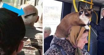 De bizarheid reist met het openbaar vervoer: 15 hilarische foto's van originele persoonlijkheden in trams, metro's en bussen