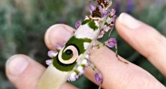 Diese Frau fand in ihrem Garten eine bezaubernde Dornenblumen- Heuschrecke
