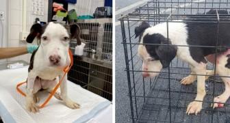 Encerrado en una jaula y tirado a un lago congelado, este perro ha sido salvado por un hombre generoso