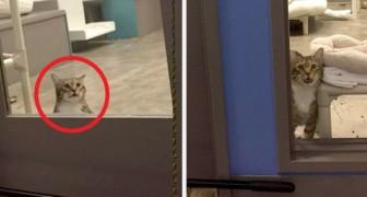 Diese Katze wurde in Isolation gebracht, weil sie den anderen Katzen immer geholfen hat, aus dem Käfig zu entkommen