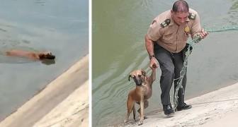 Este policía ha salvado un perro callejero que no lograba salir afuera de un canal