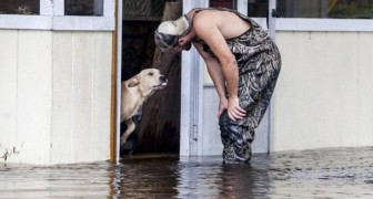 A man saves a dog abandoned during a disastrous flood and a special friendship was born