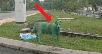 Este perro ha sido pintado de verde por algunos delincuentes y ahora arriesga su vida
