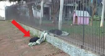 Esta cachorrinha divide a sua coberta com um cachorro de rua, demonstrando todo o amor que é capaz de dar